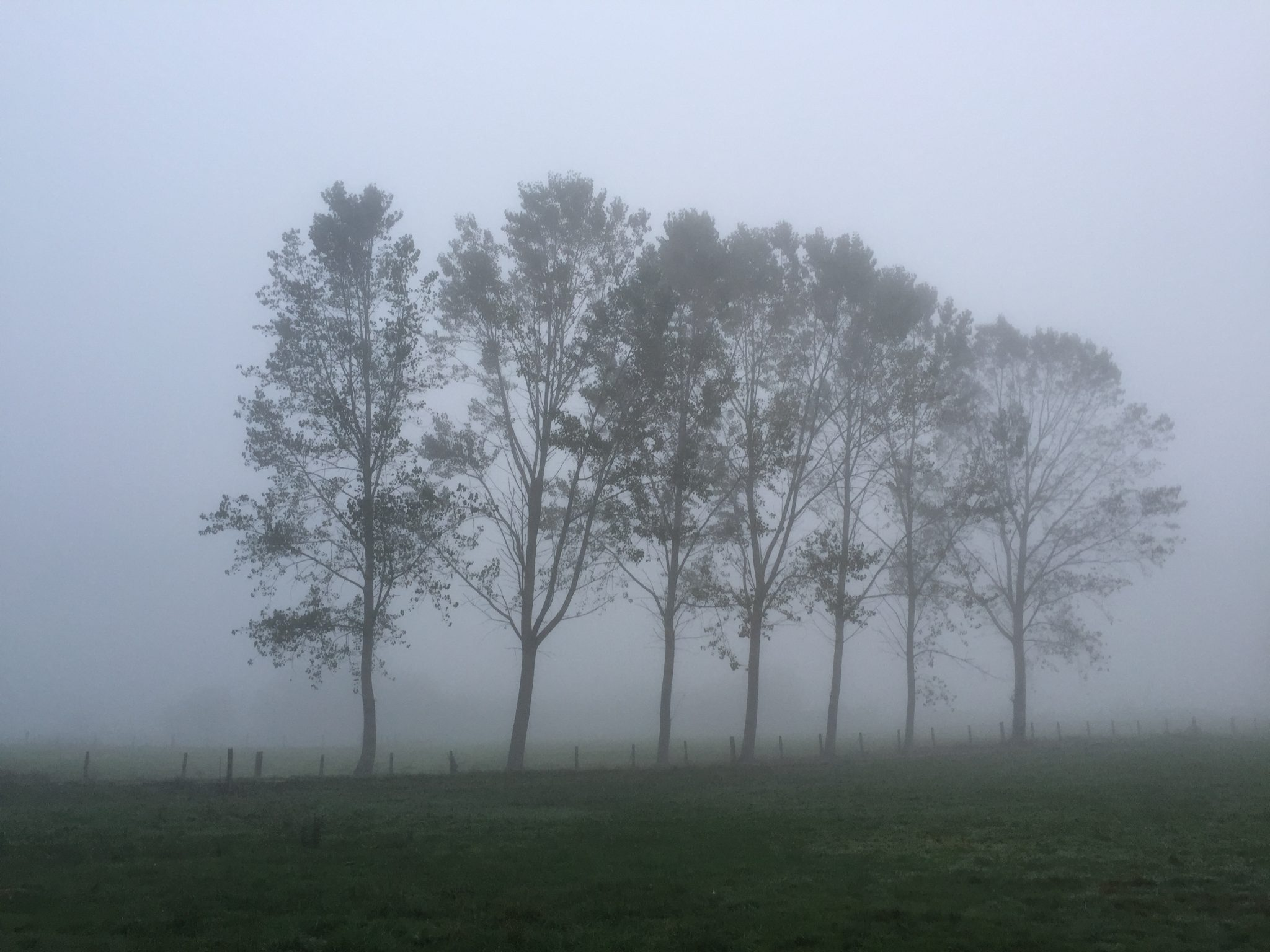 Walking In A Fog